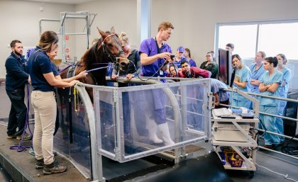 Horse on treadmill with UQVets