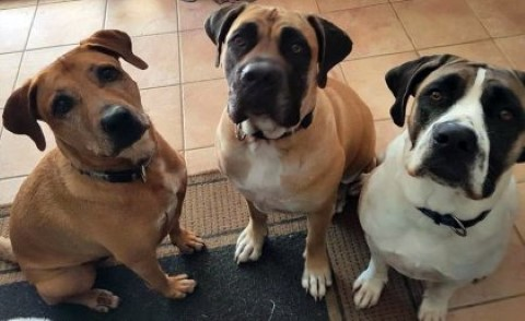 Gus (left) with sisters Skye and Storm